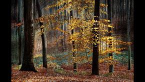 """The Cathedral Forest"" von André Teyck, Belgien"