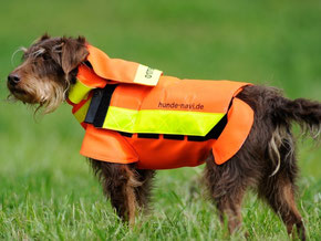 Foto: Hunde-avii