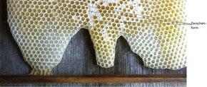 Übergangsformen der Zellen eine Bienenwabe