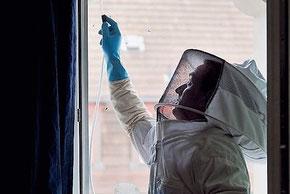 Biozida Kammerjäger bei der Bekämpfung von Wespen