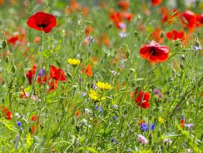 Die bunte Blumenwiese vvor dem NUZ. - Foto: Kathy Büscher