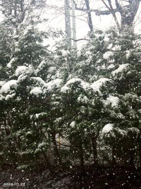 3月23日ベランダからの雪景色