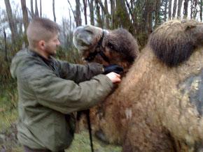 Très proche des animaux, et encore plus des chevaux, et chameaux, John C maitrise les techniques de monte comme de bât...
