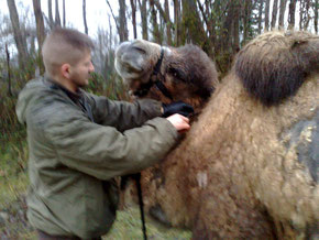 Très proche des animaux, et encore plus des chevaux, et chameaux, John C maitrise les techniques de monte comme de bât... (PHOTO 2010)