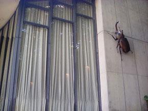橿原市立昆虫館の画像