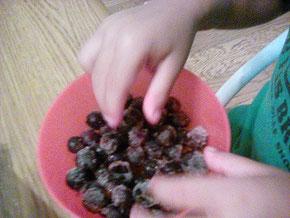 ブルーベリー収穫 冷凍