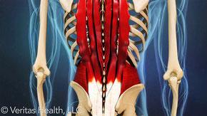 ぎっくり腰・急性腰痛は筋肉の問題が原因となっていることがあります
