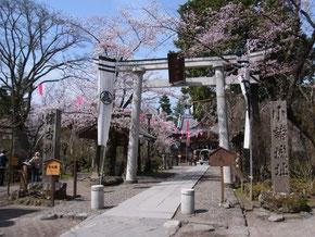 小諸の桜は4月末からが見頃です