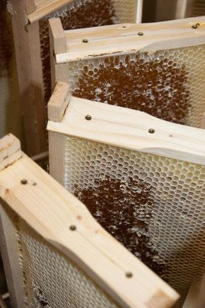 Honigschleuder Imkerei Soolergold