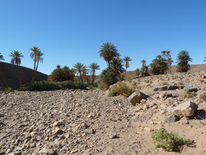 reg de la vallée du draa en trek désert