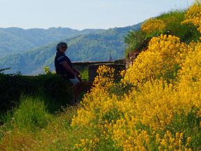 wir wanderten durch goldblühende Weingarten
