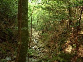 大森山保存林