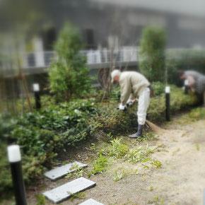 低木刈込み
