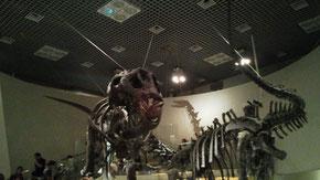 地球館 B2Fにある恐竜コーナー