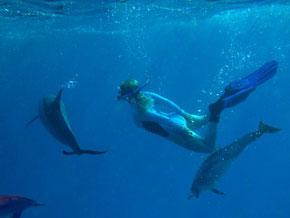 Chris beim Freitauchen mit Delfinen