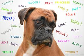 Choisir un nom pour un chien