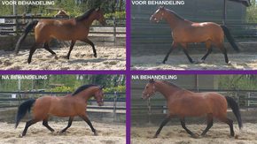 sportmassage paard