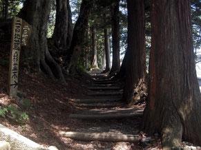 奈良井宿近くに残る杉並木。当時の中山道はこんな感じ
