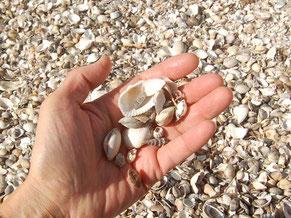 4〜6月は潮干狩りで賑わう海岸。貝殻がぎっしりだった