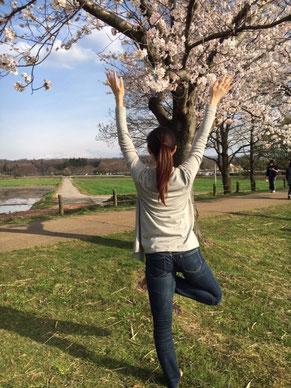 桜の木を愛でながら木のポーズ