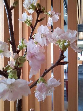 3月のお花:桜