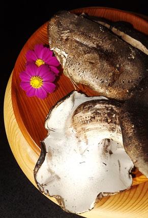 天然きのこしろまいさるまいニンギョウダケロウジクロカワセンボンシメジゴンスケショウゲンジ天然シメジシバモチイクチカワタケコウタケきのこ鍋きのこ料理店