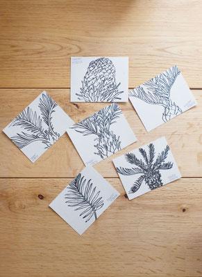 広島のイラストレーター絵本作家であるミヤタタカシの仕事。御手洗藝術農園ソテツのイラスト。