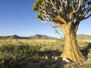 Gästefarm Ababis, Namibia, Foto: Ria Henning-Lohmann