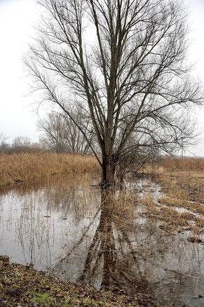 überflutete Flächen durch Biberdamm