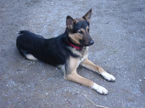 Kontakt und Hilfe bei Hundeerziehung