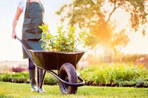 Frau mit Schubkarren pflegt einen Garten