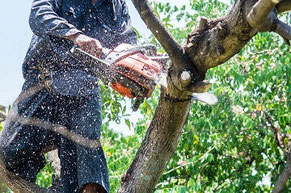 Mann beim Baum sägen