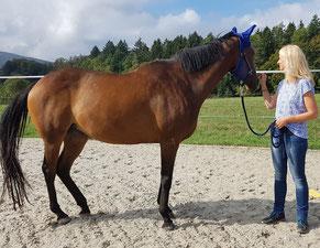 Pferdeunterstütztes Einzelcoaching by horse-feedback.ch