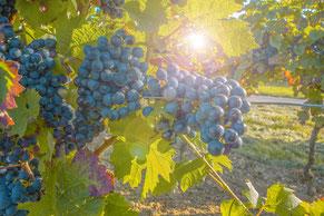 Rotwein kaufen Troisdorf, Italien, Frankreich, Spanien, Ahr
