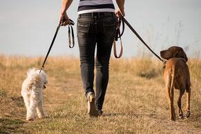 Training für Hund und Halter