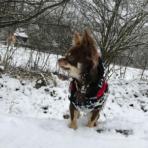 Hundekleid, Hundekleider, Hundezubehör