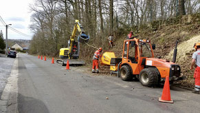 Elagage et abattage d'arbres par BLS jardin