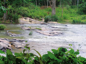 Natürliche Fischbiotope in Sri Lanka