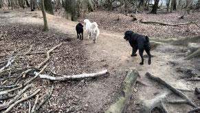 Finch, Jenna und Timy im Wald