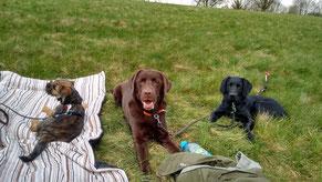 Dexter, Toni und Finch