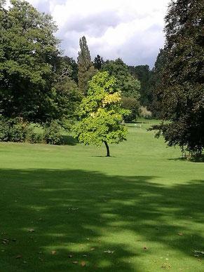 Golfplatz in Kronberg direkt am Schlosshotel verfügt über den ältesten Baumbestand traumhaft angelegt rund um den Schlosspark.