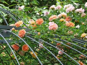 Rosengarten Rose Pavillon schmiedeeisern romantisch