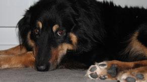 Hund in der Logopädie als Beobachter