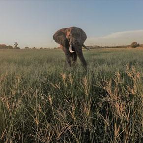 Botsuana Safari Abenteuer