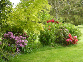 """Rhododendron """"Graziella"""""""