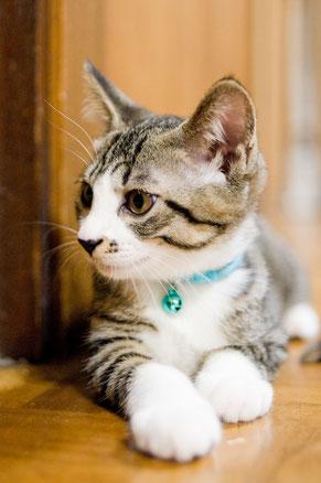 玉木動物病院|岡山市東区 犬・猫専門の動物病院