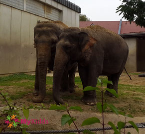 Zwei Elefanten im Zoo Augsburg