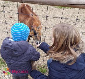 Kind und Mutter füttern eine Ziege im Wildpark Poing