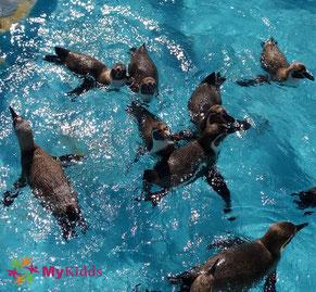 Pinguine im Zoo Köln