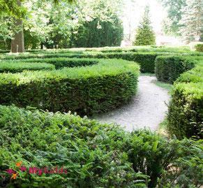 Labyrinth aus Hecken im Stadtpark Lahr